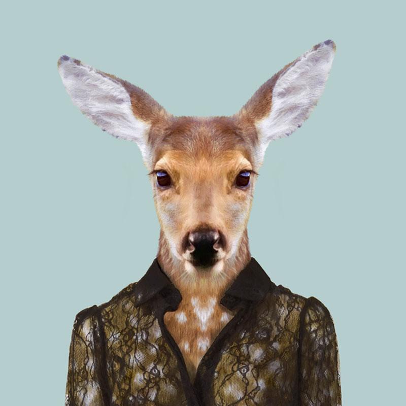 Yago Partal, Zoo Portraits