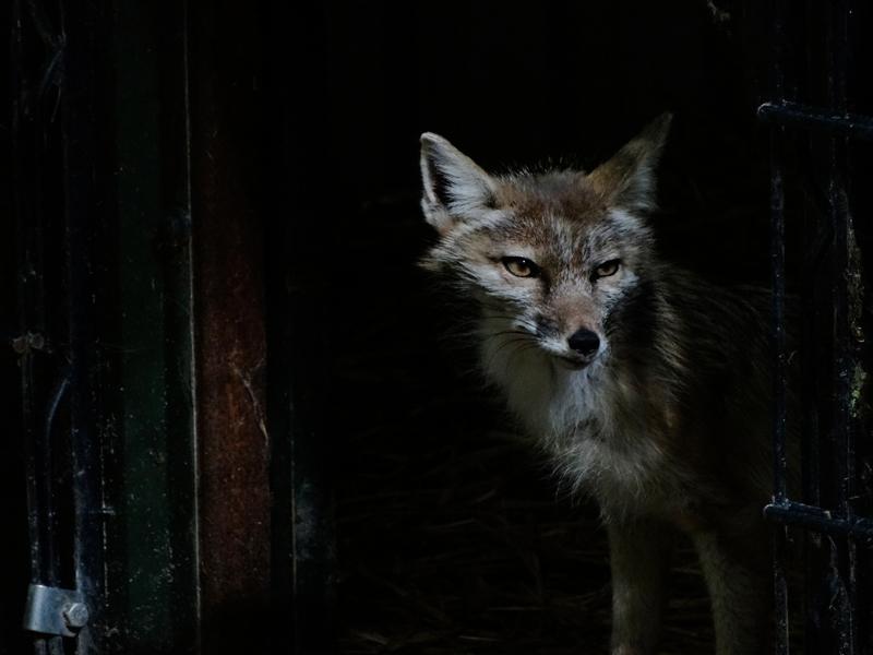 Бешенство: что делать при укусе или контакте с животным