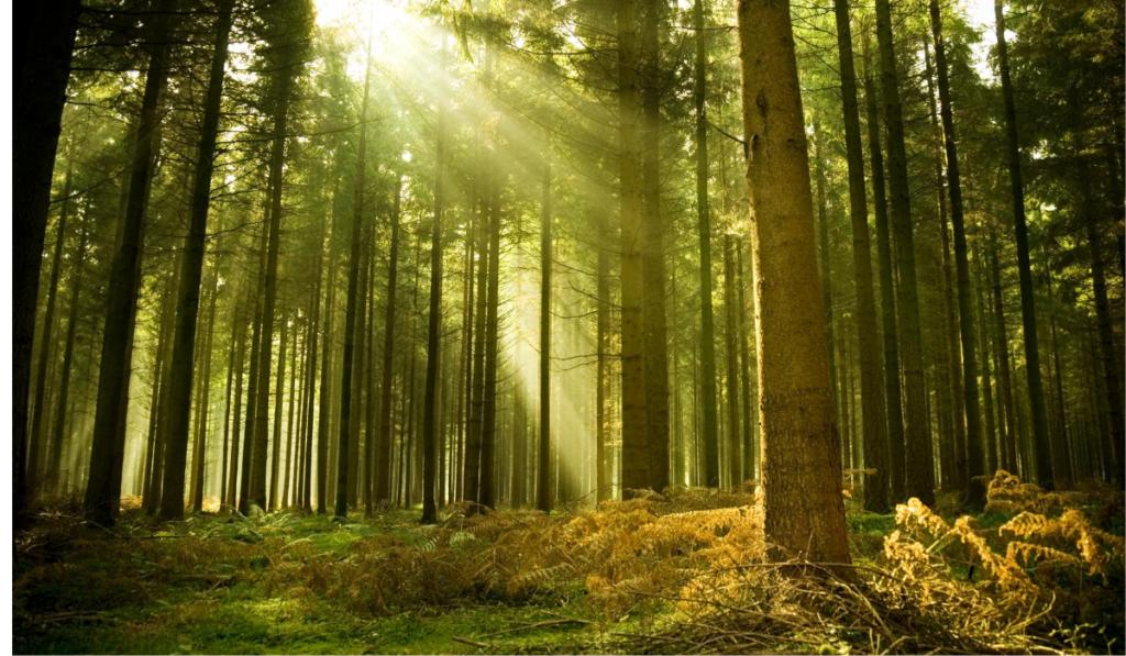 хорошо в лесу