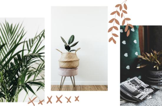 Растения в большом городе: 5 вариантов для квартиры
