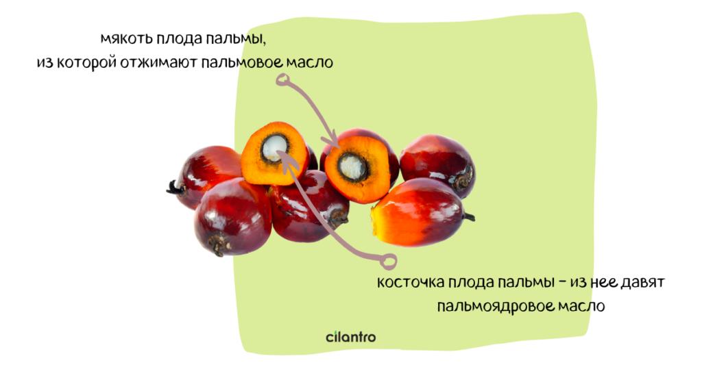 пальмовое масло состав